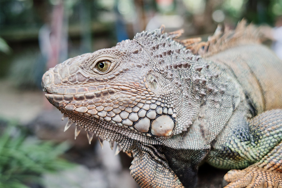 Зоопарк, Бали, Индонезия, Азия